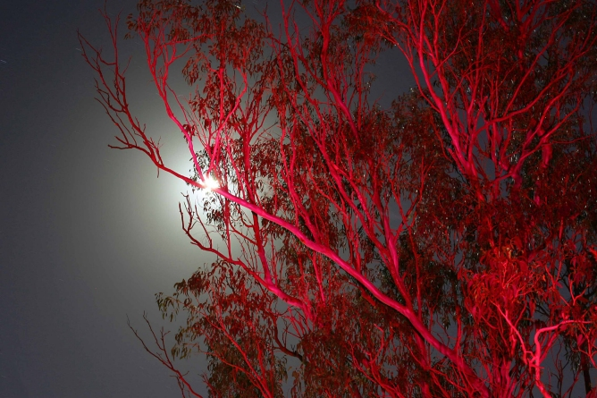 red-trees-sm